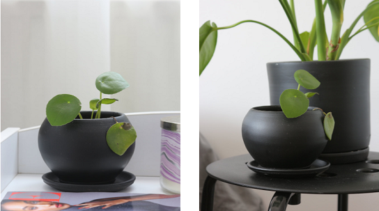 House Plant Care:Most Essential 5 Point